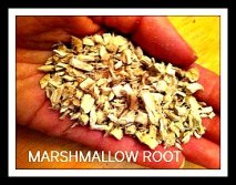 One remedy for Irritable Bowel Syndrome is Marshmallow Root in the form of tea. This root is very soothing to the mucous membranes, GI tract and urinary tract.