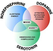 Any treatment for fibromyalgiia must include the neurochemicals in our brains.