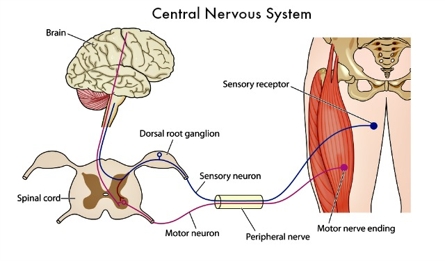Damage or mutation of the sensory receptors are a likely source of  chronic pain which explains the hypersensitivity component of neuropathy.