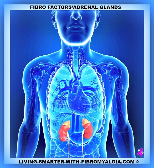 Adrenal stress can lead to an overall disruption of the endocrine system.