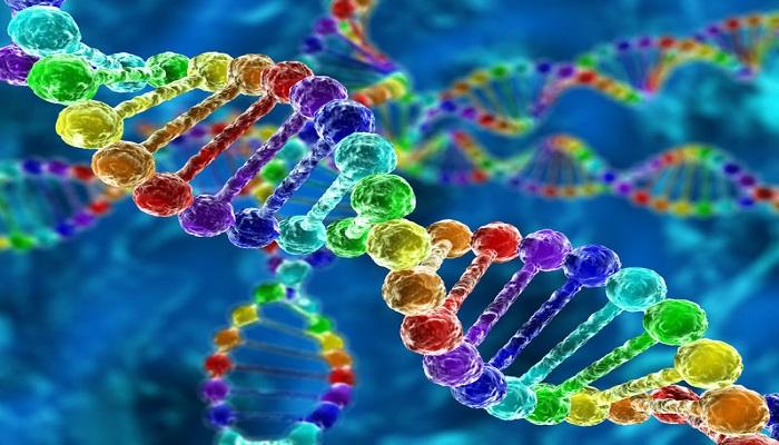 Rainbow Gene