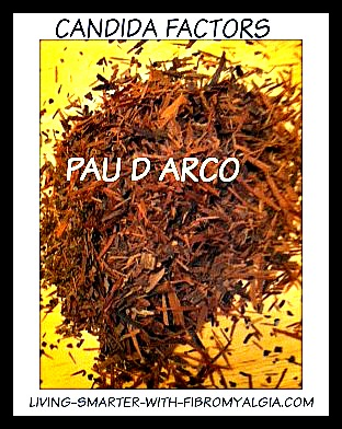 an anti-fungal herb that can be used to make tea.