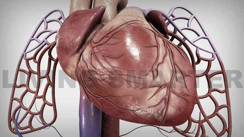 Fibromyalgia and the Heart Muscle