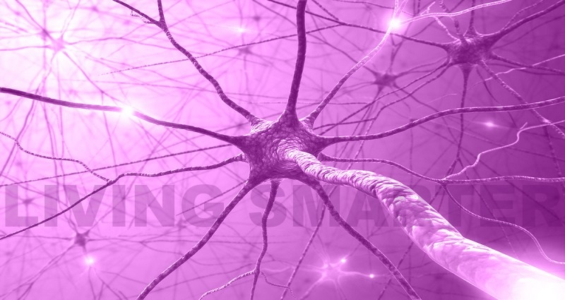 The Central Nervous System and Fibromyalgia